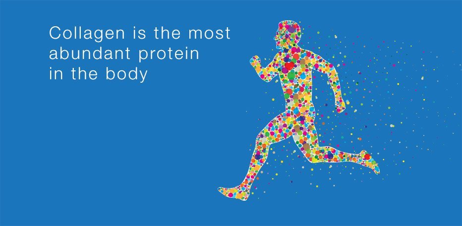 Collagen is the most abundant protein in the body